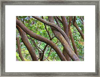 Growing Together Framed Print by James Knight