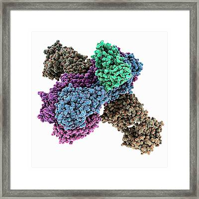 Haemagglutinin Viral Surface Protein Framed Print by Laguna Design