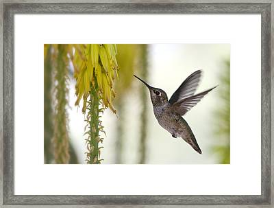 Happy Wings  Framed Print by Saija  Lehtonen