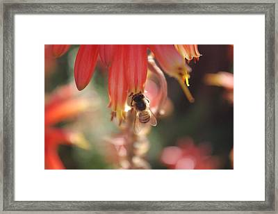 Framed Print featuring the photograph Hard At Work by David Rizzo
