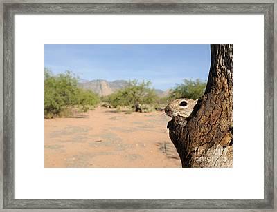 Harris Antelope Squirrel Framed Print