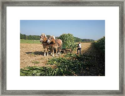 Harvest On An Amish Farm Framed Print by Jim West