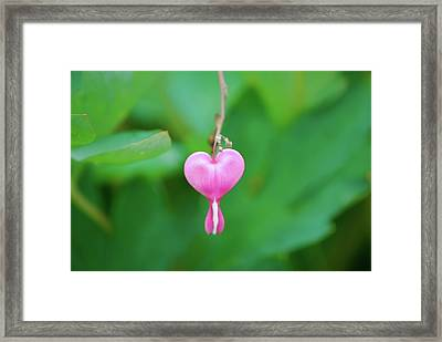 Framed Print featuring the photograph Heart On A Vine by Kathy Gibbons