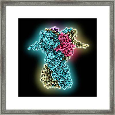 Heat Shock Protein 90 Chaperone Complex Framed Print