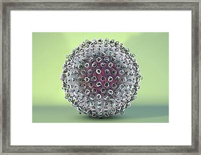 Hepatitis C Virus Framed Print