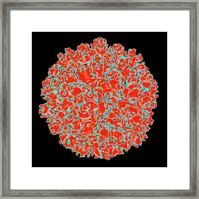 Hepatitis E Virus Framed Print