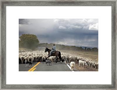 Herding Sheep Framed Print by Jim West