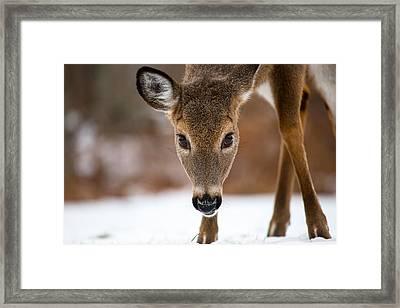 Heres Looking At You Framed Print