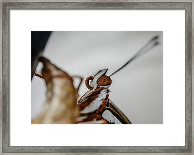 Here's Looking At You Framed Print by TK Goforth