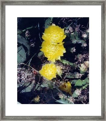 Hidden Catus Framed Print by Olivia  M Dickerson