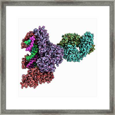Hiv-1 Reverse Transcriptase Complex Framed Print by Laguna Design/science Photo Library