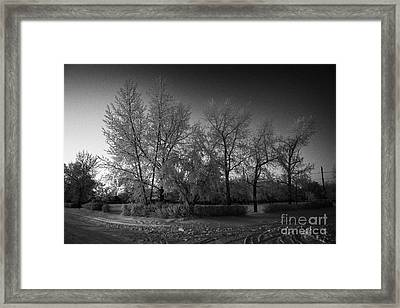 hoar frost covered trees on street in small rural village of Forget Saskatchewan Canada Framed Print