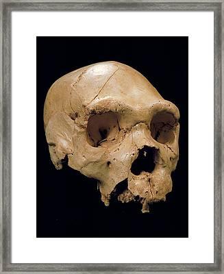 Homo Heidelbergensis Skull (cranium 5) Framed Print by Javier Trueba/msf