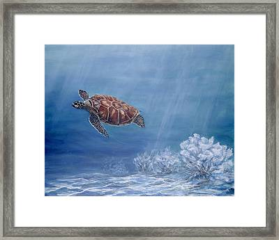 Honu Framed Print by Dorothea Hyde