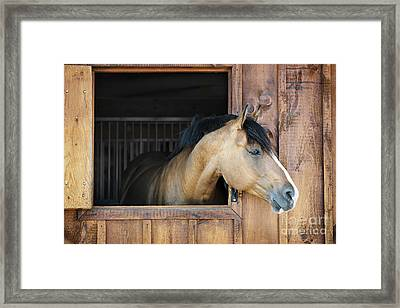 Horse In Stable Framed Print by Elena Elisseeva