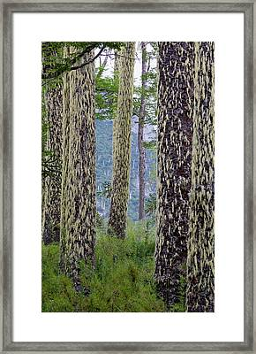 Huerquehue National Park, Chile Framed Print by Scott T. Smith