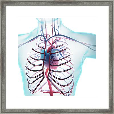 Human Circulatory System Framed Print by Andrzej Wojcicki