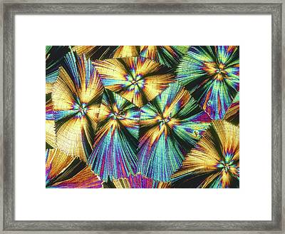 Human Growth Hormone Crystals Framed Print by Alfred Pasieka