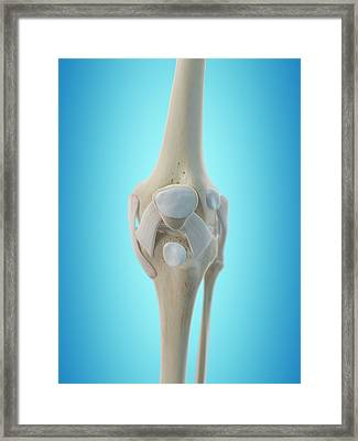 Human Knee Tendons Framed Print by Sciepro