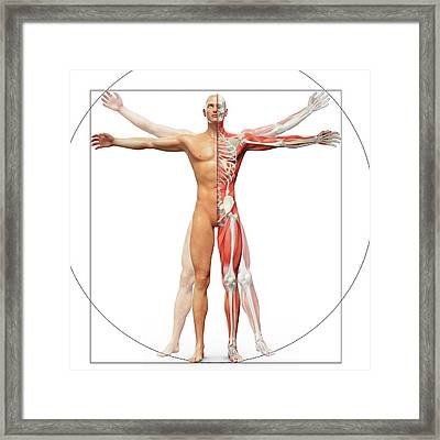 Human Musculoskeletal System Framed Print by Andrzej Wojcicki