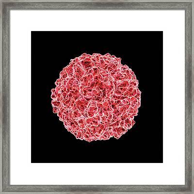 Human Rhinovirus Framed Print by Mehau Kulyk