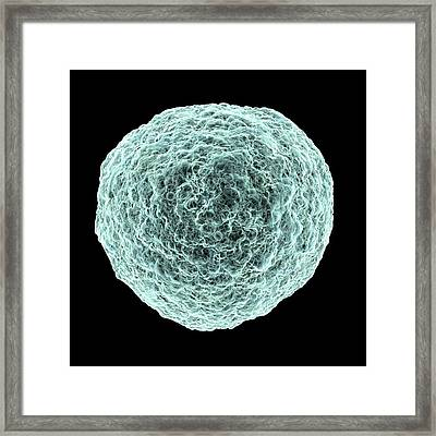 Human T-cell Leukemia Virus Framed Print