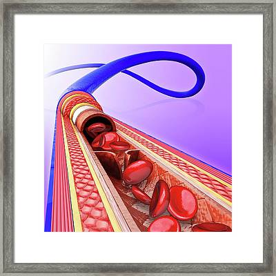 Human Vein Framed Print by Pixologicstudio