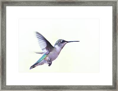 Framed Print featuring the photograph Hummer by Annette Hugen