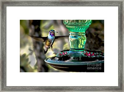 Hummer Framed Print by Robert Bales