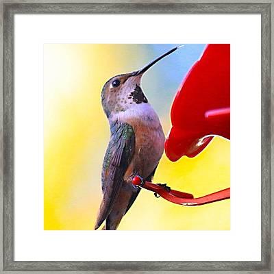 #hummingbird #bird #nature Framed Print