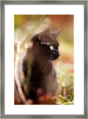 Hunter Framed Print by Ian Good