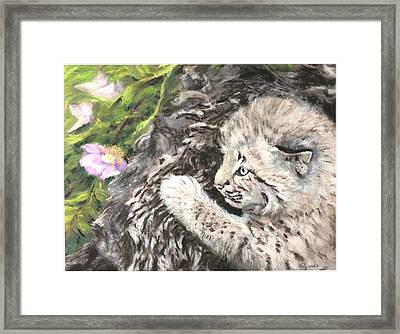 I Can Almost Reach It Framed Print by Sandy Brooks