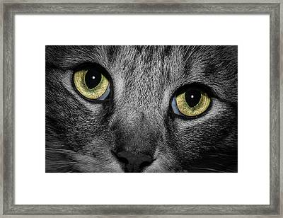 In A Cats Eye Framed Print