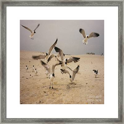 In Flight Framed Print by Mj Petrucci