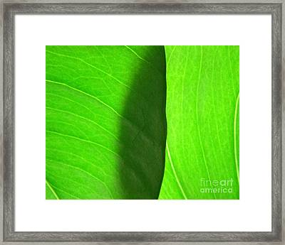 In Passing Light Framed Print by CML Brown