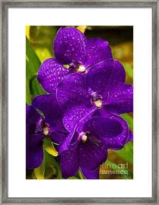 Play On Purple Framed Print