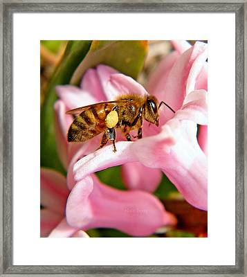 In The Pink Framed Print by Chris Berry