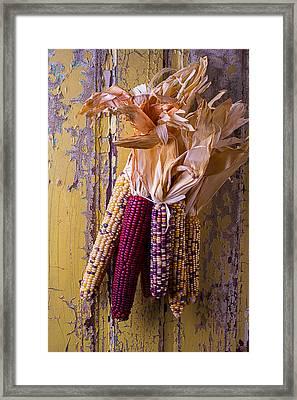 Indian Corn Framed Print by Garry Gay