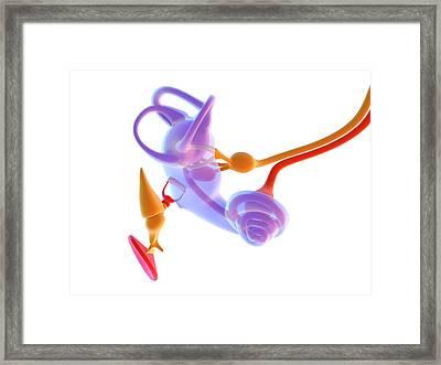 Inner Ear Anatomy Framed Print