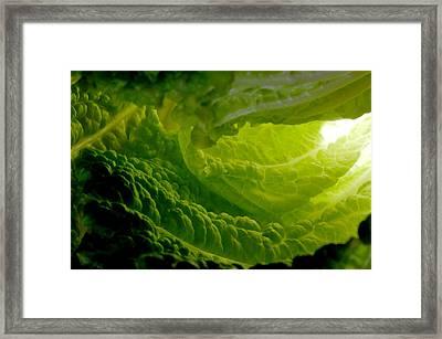 Inside A Lettuce Leaf Framed Print by Linda Mcfarland