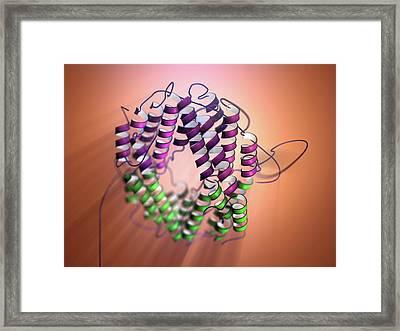 Interferon Gamma Framed Print by Hipersynteza