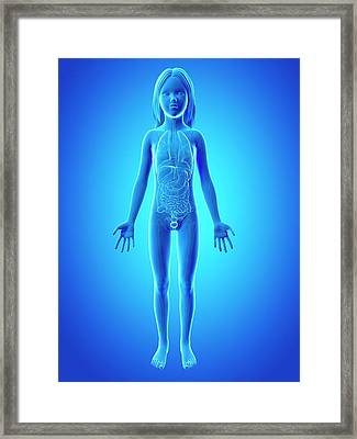Internal Organs Of Girl Framed Print