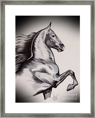 Into The Wind - Saddlebred Framed Print