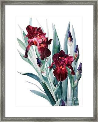 Iris Donatello Framed Print