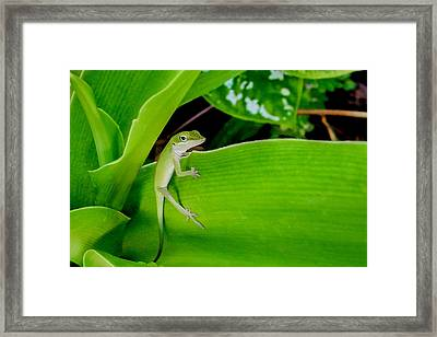 It's Easy Being Green Framed Print by TK Goforth