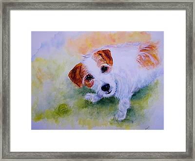 Jack Russell - Portrait - Play Ball Framed Print