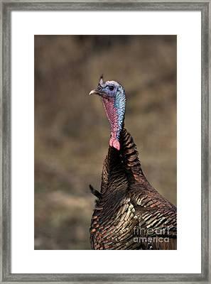 Jake Eastern Wild Turkey Framed Print by Linda Freshwaters Arndt
