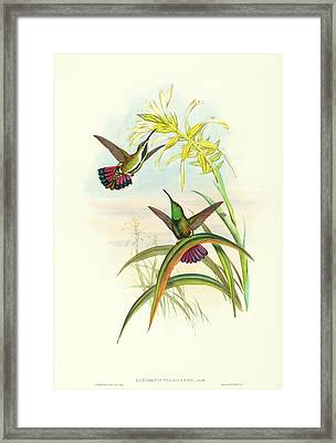 John Gould And H.c Framed Print by Litz Collection