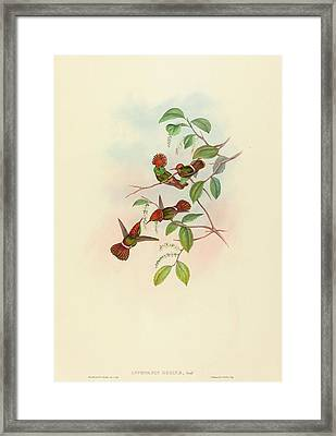 John Gould And H.c Framed Print