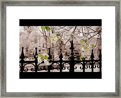 Joyce's Trees Framed Print by JAMART Photography